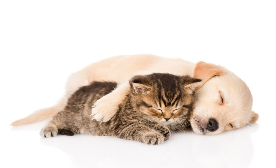 Did you know that being a pet owner comes with some significant health benefits? If you're looking for a furry, fun way to promote wellness for yourself and your employees, the answer might involve a lovable pet or two. Read on to find out more about the relationship between pets and health.