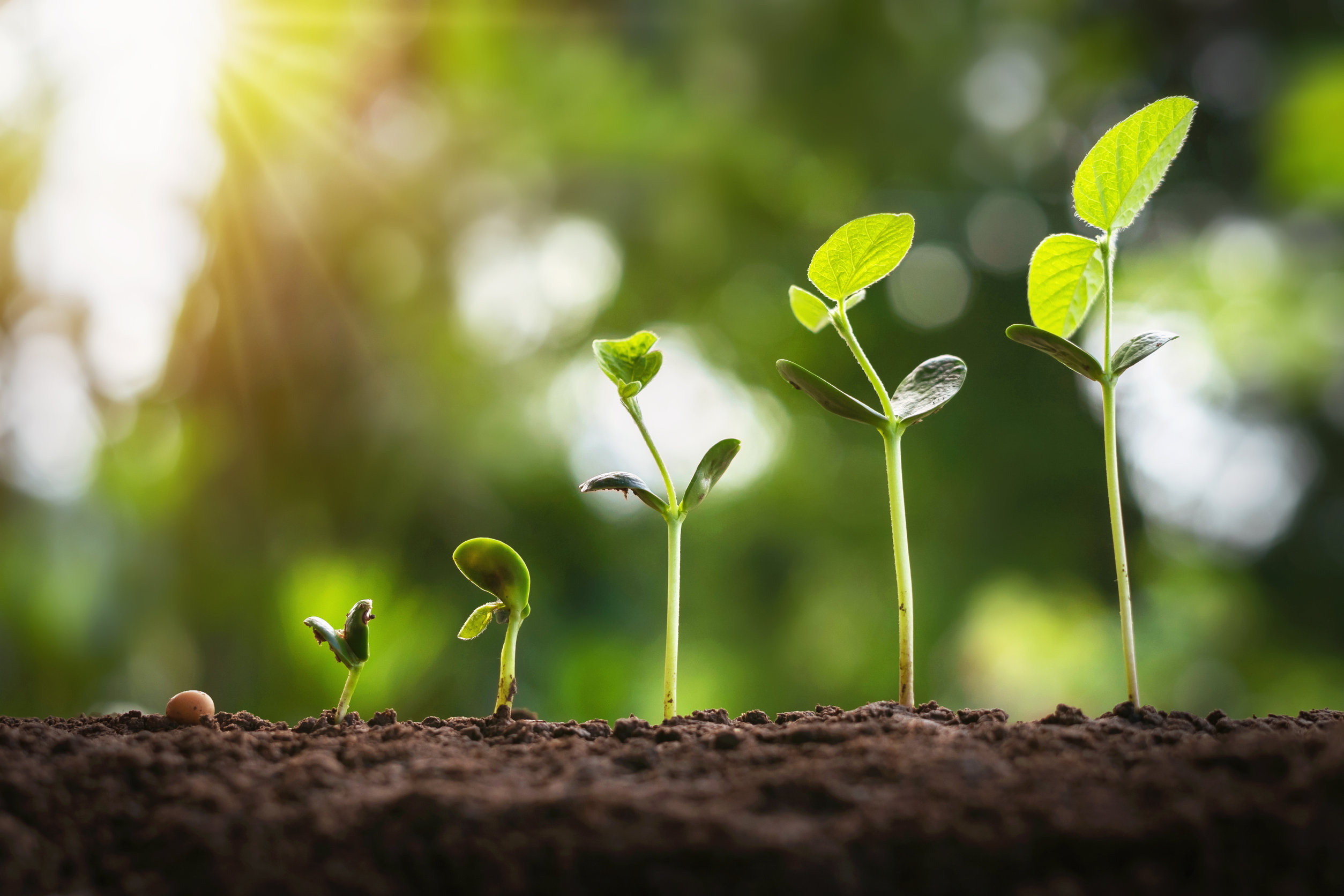 Developing sustainable growth strategies and solutions takes a measured, proactive approach. Get the most ROI on your efforts by following these steps.